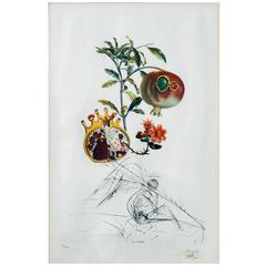 "Original Salvador Dali Etching from Flors Dali Series, ""Pomegranat Och Angel"""