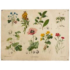 Antique Wall Chart, Flowers by Hartinger and Beck, 1879