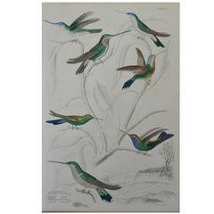 Original Antique Print of Exotic Birds 'Hummingbirds' circa 1830 Folio