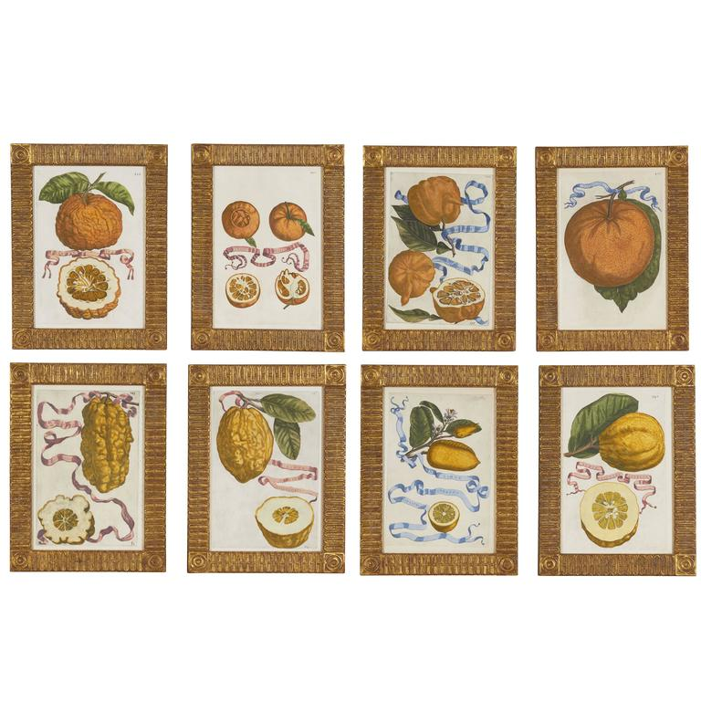 Set of Eight 17th Century Ribbon-Tied Citrus Hand-Colored Engravings For Sale
