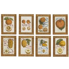 Set of Eight 17th Century Ribbon-Tied Citrus Hand-Colored Engravings