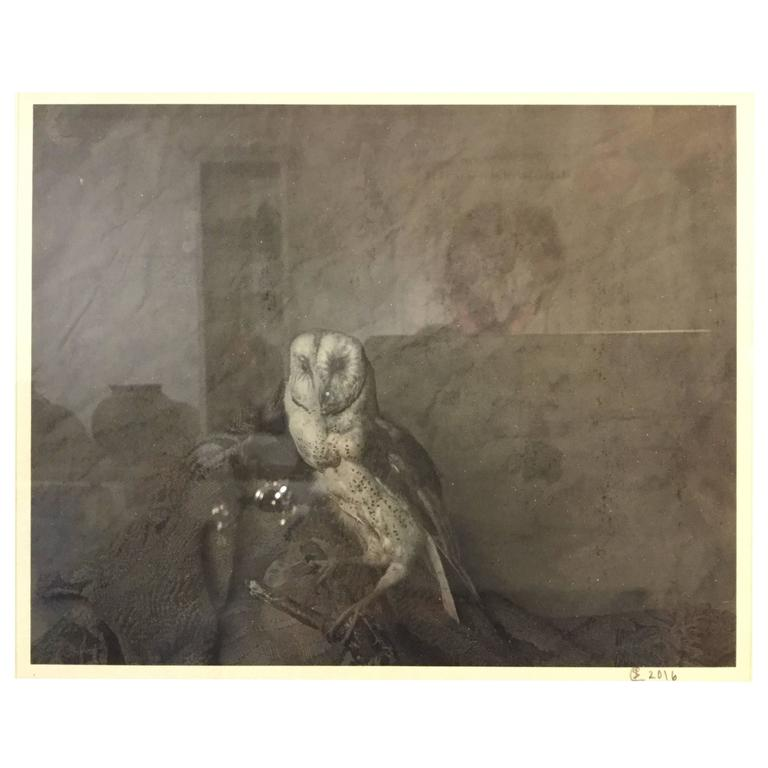 Photograph of a Barn Owl For Sale