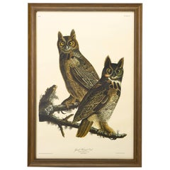 Great Horned Owl, Plate 61, Amsterdam Audubon Edition