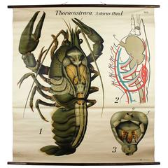 Early 20th Century Paul Pfurtscheller Zoological Wall Chart, Crustacean, 1929