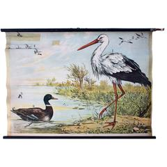 Stork, Engleders Wall Charts, Lithograph by J. F. Schreiber, 1893