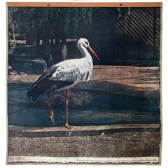 Vintage Wall Chart Stork, 1916