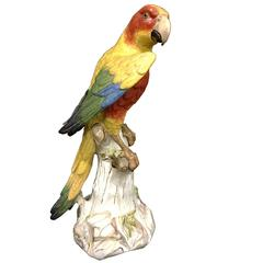 Large 19th Century Meissen Parrot