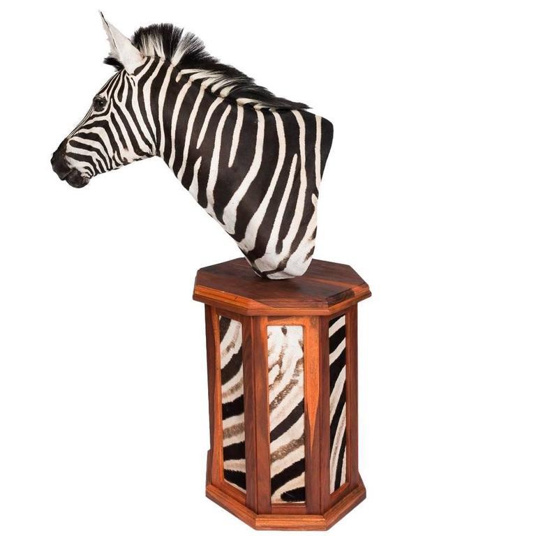 Elegant African Large Taxidermy Burchell Zebra on Stand