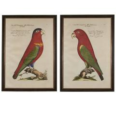 Striking Pair of Framed Very Large Scale Engravings After J. Frisch