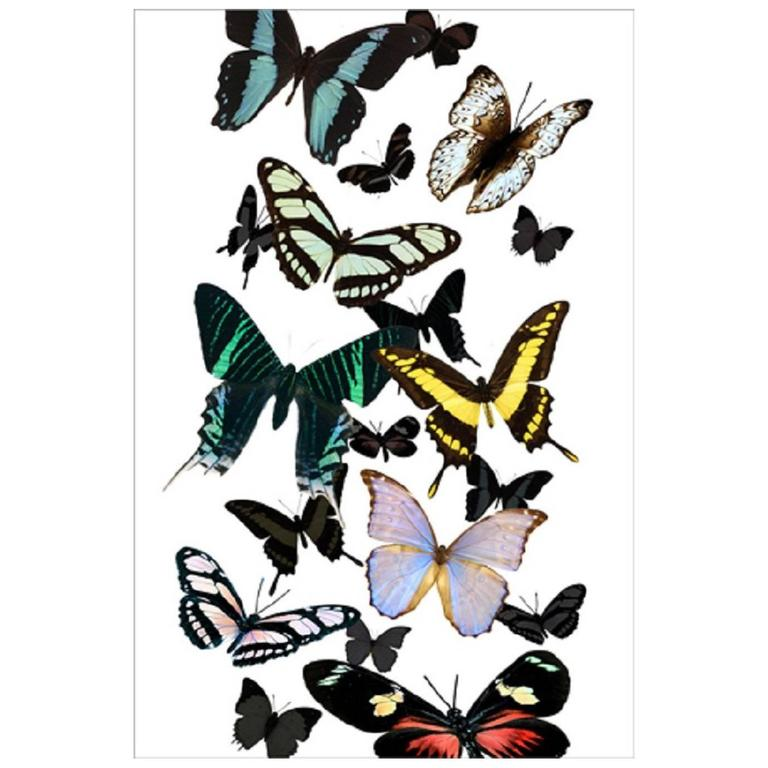 Butterflies on Plexiglass 1