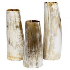 Natural Buffalo Horn Vases, Set of Three