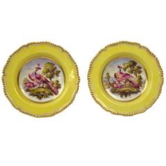 Pair of Flight Barr and Barr Worcester Berry Plates
