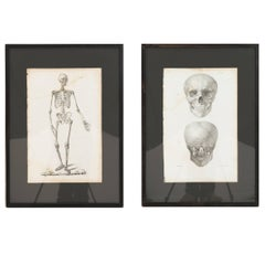 Pair of French Anatomical French Engravings