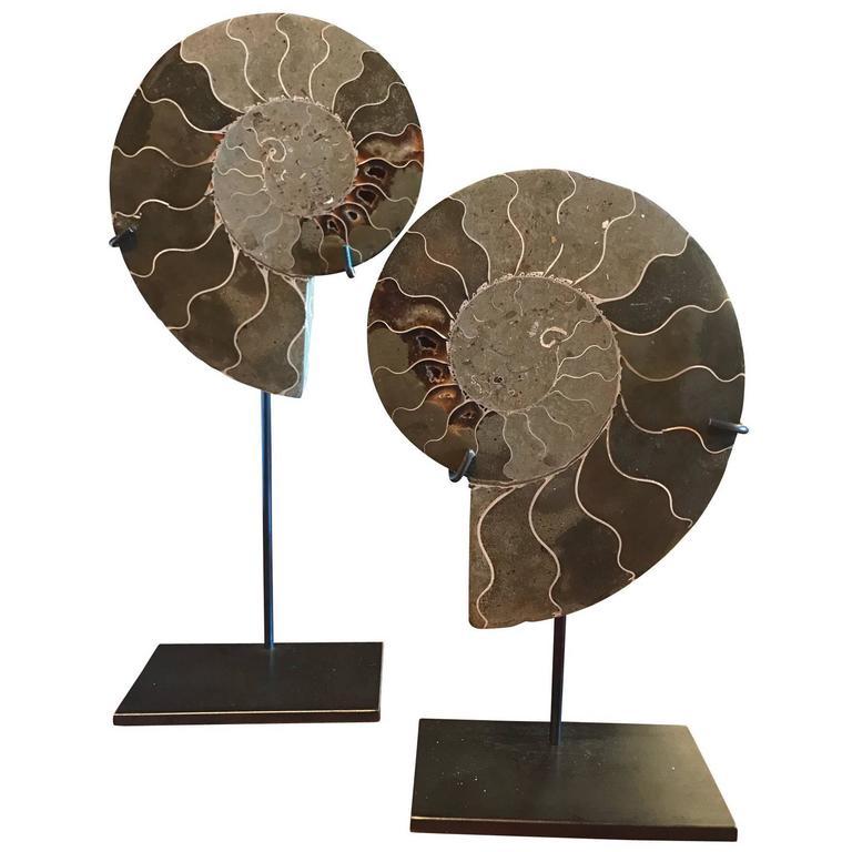 Prehistoric Pair of Ammonite Sculptures, Madagascar