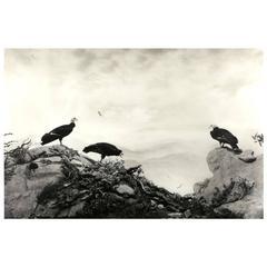 "Hiroshi Sugimoto, ""California Condor"", 2012"