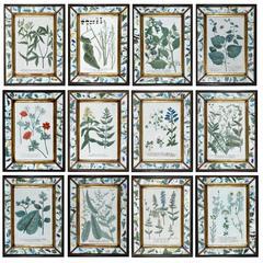 Set of Twelve Botanical Engravings, Johann Wilhelm Weinmann, circa 1740