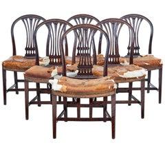 Set of Six, 19th Century Birch Swedish Dining Chairs