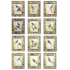 Set of 12 18th Century Francois Nicolas Martinet Engravings of Parrots