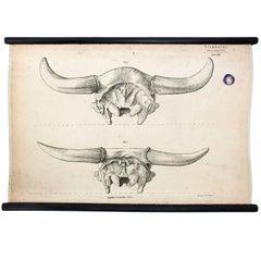 Wall Chart, Stock Farming, Hermann Von Nathusius, 1849
