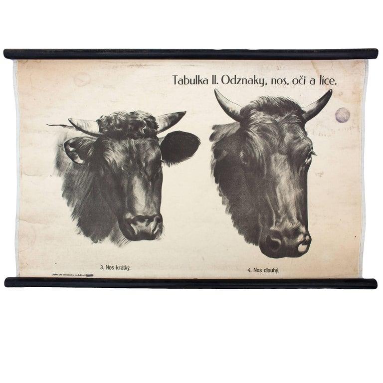 Atemberaubend Kuh Arbeitsblatt Auge Dissektion Antworten Ideen ...