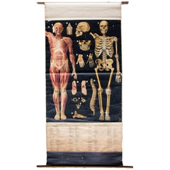 Anatomical Wall Chart by Professor Max Haim, Hannover, 1918