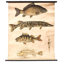 Wall Chart, Fishes, Engleders, Lithograph by J. F. Schreiber, 1893
