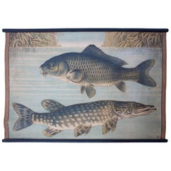 Wall Chart of Luce and Carp, Lithograph by Karl Jansky, Böhmen, 1888