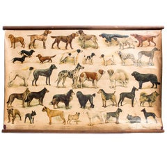 Wall Chart, Breed of Dogs, Educational Chart, 1918