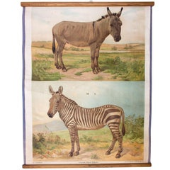 Wall Chart Donkey, Zebra, Th. Breidwiser for Gerold & Sohn, 1879