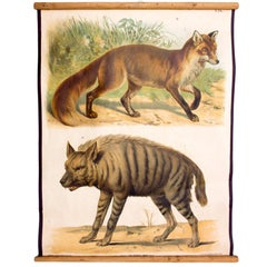 Wall Chart of Hyena and Fox by Th. Breidwiser for Gerold & Sohn, 1879