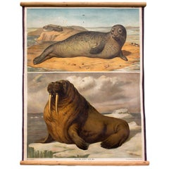 Wall Chart, Seal, Sea Lion, Th. Breidwiser for Gerold & Sohn, 1879