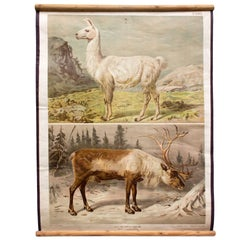 Wall Chart of Deer and Reindeer by Th. Breidwiser for Gerold & Sohn, 1880