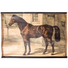 Wall Chart of Horse, Lithograph by Karl Jansky, Böhmen, 1880