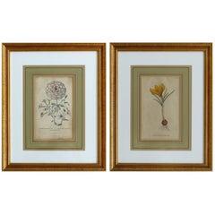 Antique English Botanical Engravings, Pair