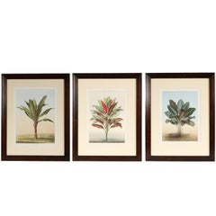 Set of Three Botanical Chromolithographs