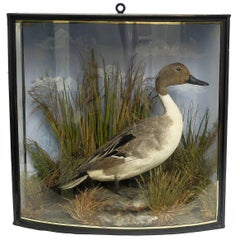 Natural Wunderkammer Pond Diorama with a Malard, London, circa 1880