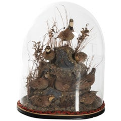 Victorian Glass Dome Bird Display