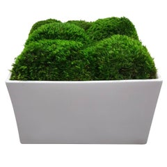 Botanical in Glossy White Square Planter