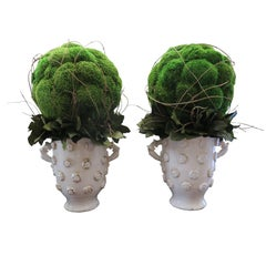 Moss Spheres in White Large Vases