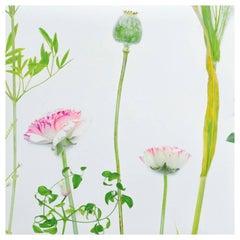Flora Wildflower Wallpaper or Wall Mural in Matte