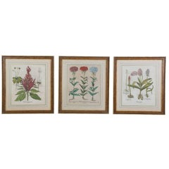 Three 18th Century Prints