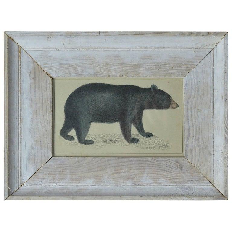 Original Antique Print of a Bear, circa 1850