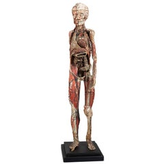 Dr Auzoux Anatomical Model, circa 1880