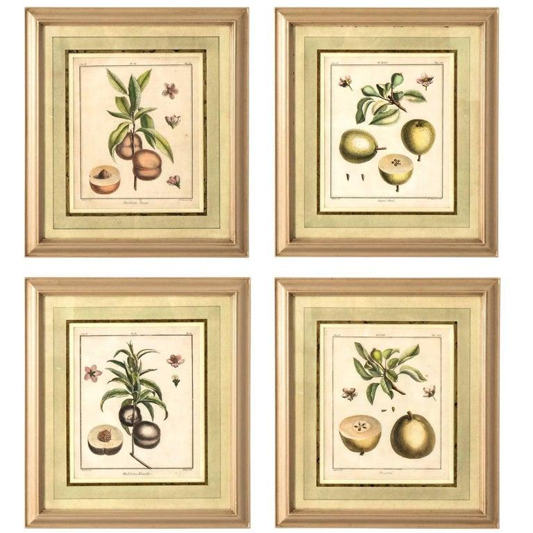 Set of Four Martinet Fruit Engravings