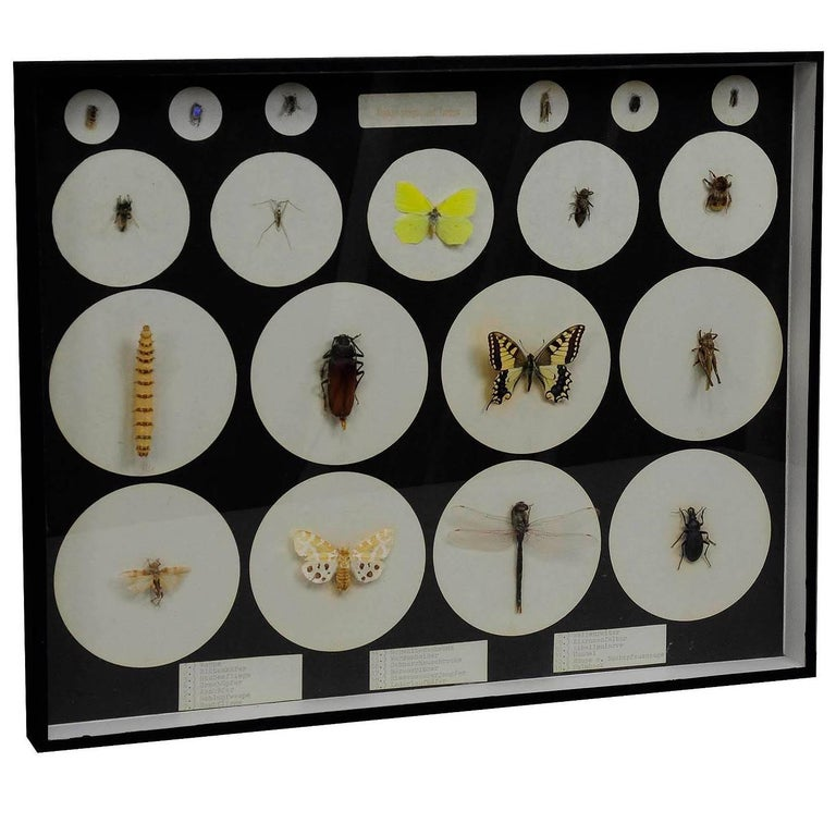 School Teaching Display Forms of Insects, circa 1960