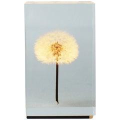 Oled Tampopo Acrylic Dandelion Object Light Takao Inoue