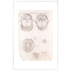 16th Century Andreas Vesalius Anatomical Print on Acrylic