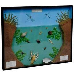 Great Vintage School Teaching Display of the Fresh Water Habitat