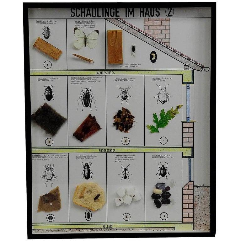 Vintage School Teaching Display of Household Pests (2)