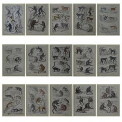 Set of 15 Antique Monkey Prints in Faux Ivory Frames, 1830s